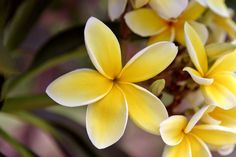 Image result for island pictures with flowers