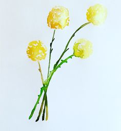 Watercolour Craspedia #botanicalwatercolor Watercolor Flowers, Watercolor Paintings, Paint Flowers, Watercolour, Pansies, Daffodils, Tulips, Tall Flowers, Lily Of The Valley