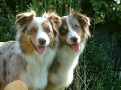 Inspiration for Mack and Maggie - Jack's dogs