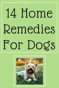14 Home Remedies for Sick Dogs natural medicine for poorly pooches health, tummy upsets, dry skin, anxiety, remedy, sickness, health problems #doghealth