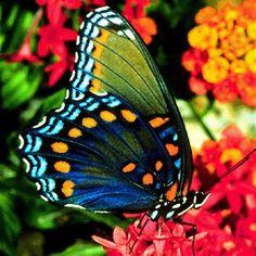 Resultados da Pesquisa de imagens do Google para http://cdn.mundodastribos.com/426588-As-borboletas-mais-bonitas-da-natureza-fotos-2.jpg