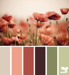 poppy tones - green and pink color palette