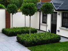 a refreshing alternative to regular informal planting scheme, densely planted clipped Box in conjunction with specimen Bay Laurel Standards provides plenty of scope to produce a more formal and understated look.