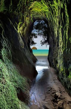 Sea cave in the Abel Tasman National Park, New Zealand. The Park for all seasons is New Zealand's finest coastal National Park, located at the top of the South Island and basking under the most sunshine hours in the country, year-round. The Abel Tasman Coast Track, from Marahau to Wainui is 51km (32 mile) long. The section between Marahau and Totaranui is 38 kms (24 miles). New Zealand
