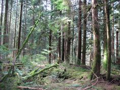 Maintained by the Faculty of Foresty at UBC, the Malcolm Knapp Research Forest offers a series of hiking trails throughout the park.