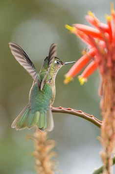 Hummingbird by Eriko Mendoza