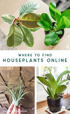 tips for shopping online for houseplants — where to find them for cheap, which stores have quality plants, tips on which plants to pick, and more #houseplants #homedecor #urbanjungle