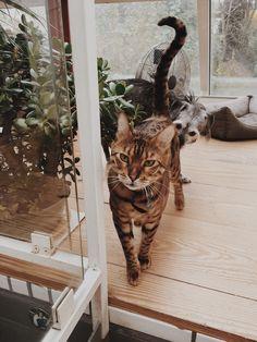 #catlovers #catattitude