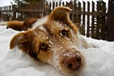 Protecting Dogs In The Winter Freeze: The Experts Speak on Bark and Swagger