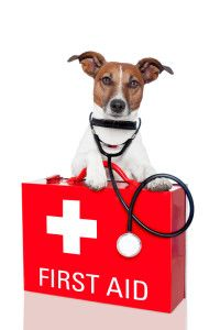 Best first aid kit for your dog + a few customizations