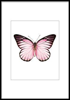 Poster / print med rosa fjäril   Tavlor och affischer med insekter