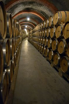 Bodegas-Protos-vino-Ribera-Duero Valladolid  Spain
