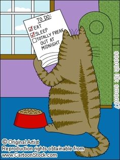 Typical cat To-Do list