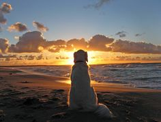 thisis how I like to think of Nero, Chillin and watching the sunset on a beach :)