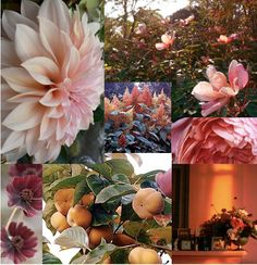 Color class: copper and rose (Sarah Ryhanen) Tags: flowers Shades Of Peach, Copper Rose, Pink Tulips, World Best Photos, Beautiful Patterns, Pretty In Pink, Floral Arrangements, Wedding Flowers, Floral Design