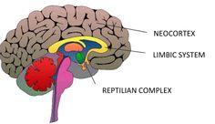 dating reptilian hjerne lovlig aldersgrænse for dating i south carolina