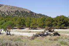 Woodland, outskirts of Orce village.