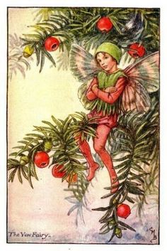 Yew Flower Fairy » Flower Fairy Prints- Vintage Fairy Prints by Cicely Mary Barker for sale
