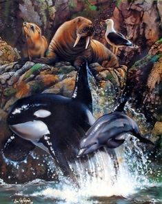 Sea Life Whale Dolphin Animal Collage Ocean Wall Decor Ar... https://www.amazon.com/dp/B009YCPLRM/ref=cm_sw_r_pi_dp_x_5Ln6xb209K9AQ