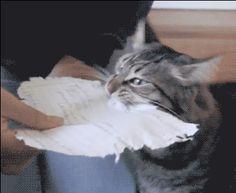 Le digo qb el gato fue el q se comió mi tarea