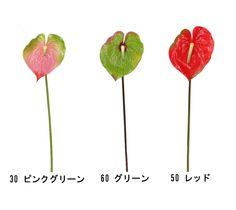 アンスリウム 造花/フェイク/アーティフィシャルフラワー/花資材/装飾/販促- 卸・仕入れ - 園芸と雑貨のジャパン・アート