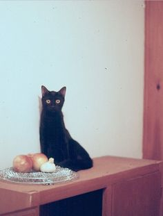 cool photo of cat
