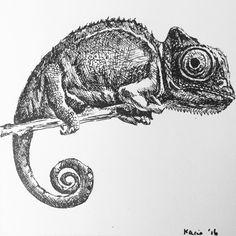 how to draw a tuatara