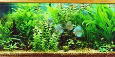 Freshwater Fish Tanks & Live Plants Manhattan & Westchester County ...