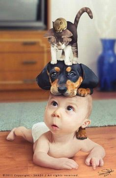 Hmmm.... Let's see... Baby, puppy, kitty, hamster. what could go wrong?