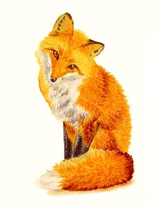 Cute Red Fox Greeting Card, 5x7 Forest Creature Art Illustration