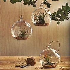 Decora con plantas   Decorar tu casa es facilisimo.com