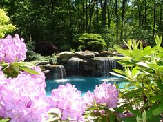Backyard landscaping and water feature swimming pool in Mahwah, Bergen County, NJ.   The man made waterfalls are constructed of Pa. colonial boulders.  In the foreground is  a Rhododendron catawbiense 'Roseum elegans'.  Atop the water feature  Sedum, (stonecrop) and Picea abies 'Nidiformis' (bird's nest spruce),