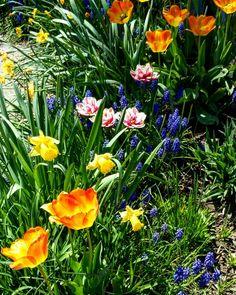 April showers🌷💐🌹 Instagram: pennsylvaniaprep97 • • • • • • • • #photography #sunday #staypreppy #follow #moodygrams #visualcrush #flowers #peoplescreatives #like4like #instalike #prep #preppy #prepster #preppylife #preppystyle #classy #catholicism #instagood #instablogger #flowers #beauty #like #blooms #spring #earth #faith #beautiful #love #garden #pic