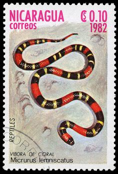 Postage Stamps of Nicaragua.  This one features a Coral Snake.