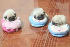 The noise I just made on seeing this photo was a definite squeeeeeeeeeeee baby pugs. The noise I just m Shares Cute Pugs, Cute Funny Animals, Cute Baby Animals, Animals And Pets, Funny Dogs, Pug Love, I Love Dogs, Tiny Puppies, Cheap Puppies
