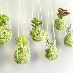 25 Indoor Succulent DIY Project Ideas Page 4 of 4 Succulent String Garden Garden Web, Easy Garden, Indoor Garden, Indoor Plants, Garden Design, Balcony Garden, Organic Gardening, Gardening Tips, Suculentas Diy