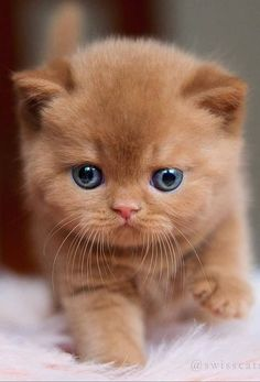Super Cute Kittens, Cute Puppies And Kittens, Cute Baby Cats, Super Cute Animals, Cute Little Animals, Cute Funny Animals, Kittens Cutest, Funny Animal Pictures, Funny Cats