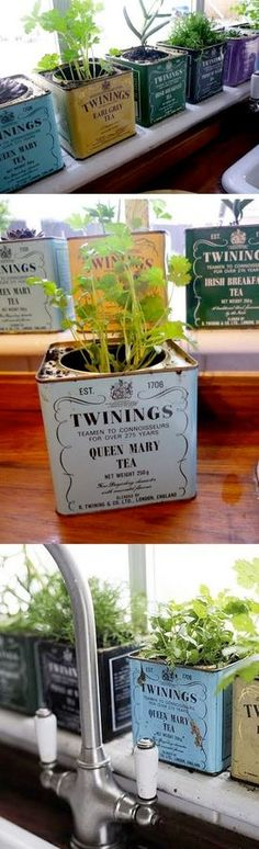 Tea tins turned herb garden - such a cute idea