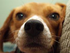 Estudo: memória de cães é mais afiada do que se imaginava