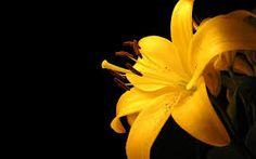 Resultado de imagen para wallpaper negro y amarillo