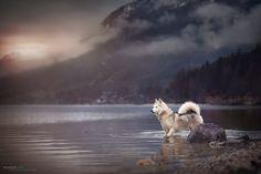 Much landscape - a little bit of a dog by Anne Geier on 500px