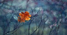 My Impressionist Photos Of Autumn In Poland | Bored Panda