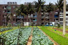Urban Agriculture Cuba