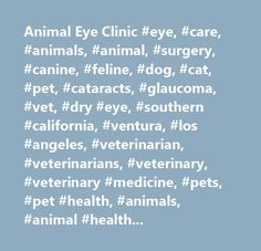 Animal Eye Clinic #eye, #care, #animals, #animal, #surgery, #canine, #feline, #dog, #cat, #pet, #cataracts, #glaucoma, #vet, #dry #eye, #southern #california, #ventura, #los #angeles, #veterinarian, #veterinarians, #veterinary, #veterinary #medicine, #pets, #pet #health, #animals, #animal #health, #veterinary #association, #veterinary #associations, #health, #veterinary #health, #healthy #pet, #vets, #hospital, #clinic…
