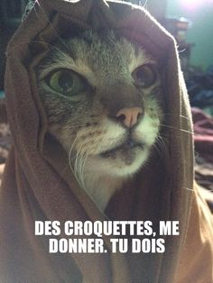 Mon chat en mode Yoda http://www.15heures.com/photos/5bb6 #LOL