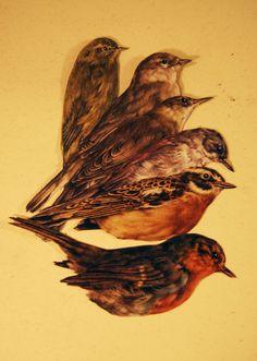 by samantharehark  #illustration #birds