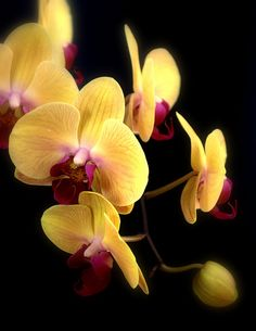 Yellow Orchid Flowers by Nate Abbott Amazing Flowers Photos, Rose Color Meanings, Yellow Orchid, Orchidaceae, Belleza Natural, Tropical Flowers, Garden Plants, Beautiful Flowers, Real Flowers