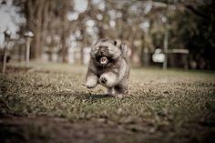 a running puffball