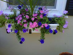 Window Box Contest Entry Water Fall Flower- Window Box