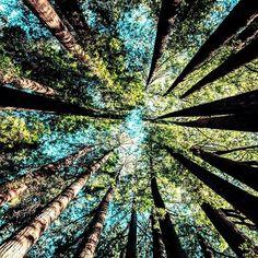 ▷ 1001 + spring landscape photos to celebrate the awakening of nature-- Beautiful image for free wallpaper spring, green forest and blue sky image spring, original perspective photo forest crowns of pine trees Nature Aesthetic, Pretty Pictures, Beautiful Nature Pictures, Best Nature Photos, Beautiful Nature Wallpaper, Nature Pics, Calming Pictures, Inspiring Pictures, Pretty Photos